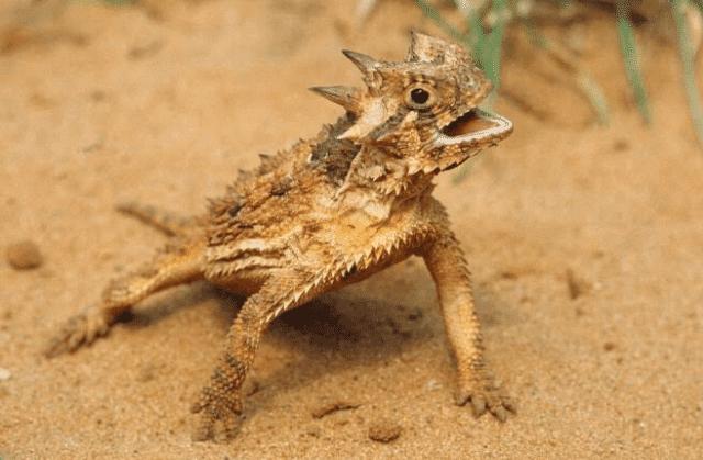 Scientifically Hybrid Animals