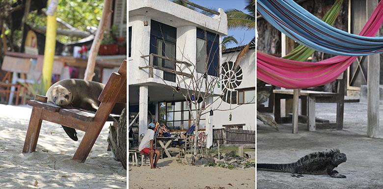 Alojamientos Galápagos, Isabela, Puerto Villamil