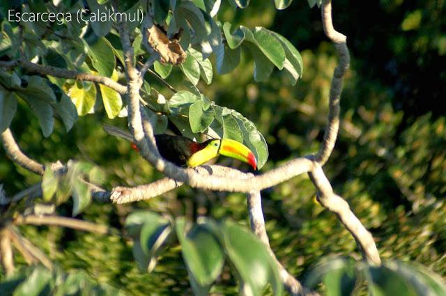 http://cherryvegzombie.blogspot.fr/2013/02/calakmul_9447.html