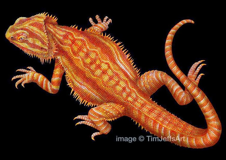 Tiger Cute Drawing Wallpaper Simply Creative Colorful Drawings Of Reptiles By Tim Jeffs
