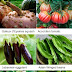 Heirloom Vegetable Plants
