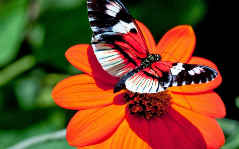 Felici contenti organizzazione eventi e matrimoni for Immagini farfalle per desktop