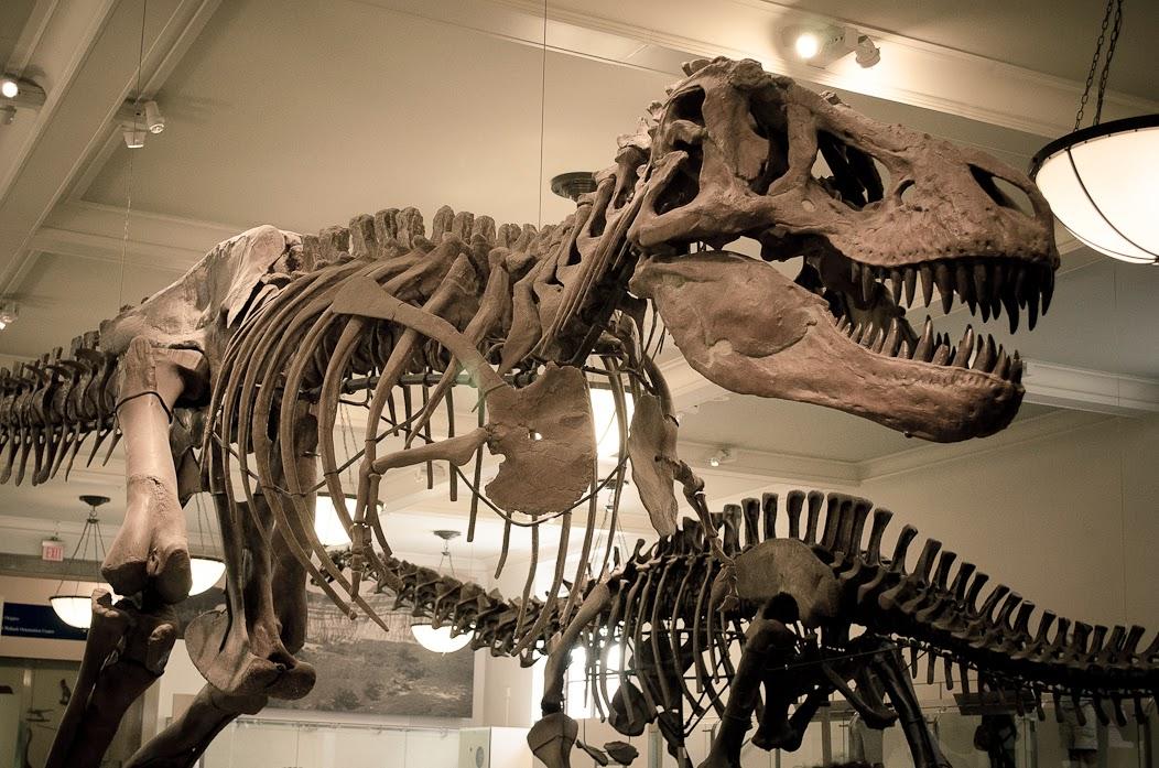 O que fazer em NY - Museu Historia Natural