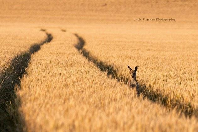wildlife-photography-3