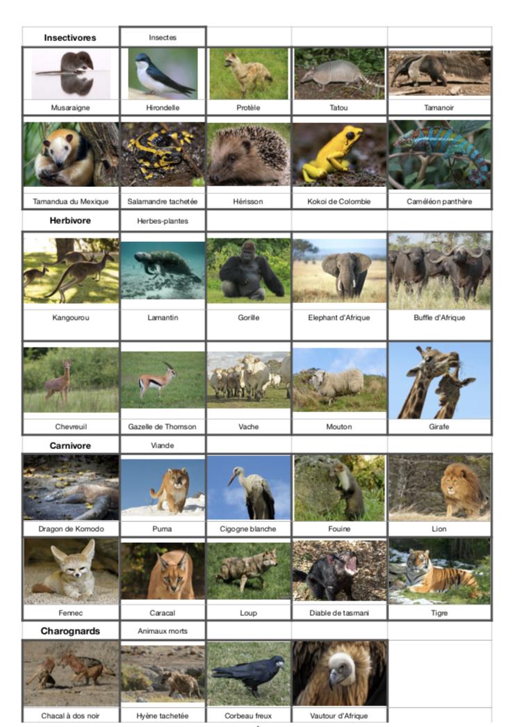 Les Régimes Alimentaires Des Animaux : régimes, alimentaires, animaux, Montessori:, Régime, Alimentaire, Animaux