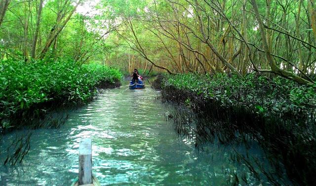 Hutan Mangrove Lampung Timur