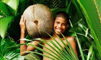 Орех от сейшелска палма
