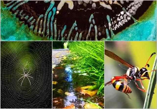 37 Gambar Wallpaper Bunga Dan Kumbang Untuk Iphone 7 Koleksi Wah Ok