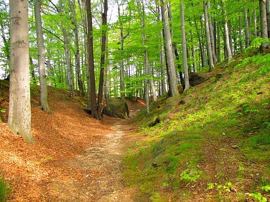 Koryto dawnej fosy na Wzgórzu Krzywoustego.