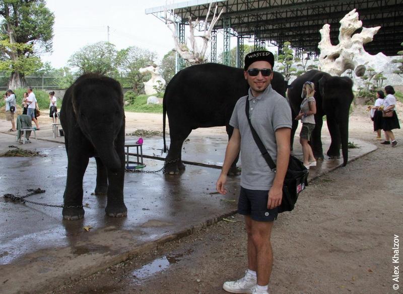 Слон на ферме
