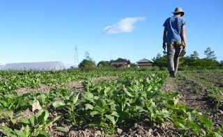 Αλλάζει το Πρόγραμμα Αγροτικής Ανάπτυξης