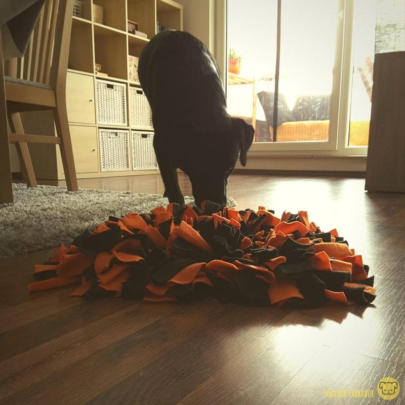 Labrador mit Schnüffelteppich
