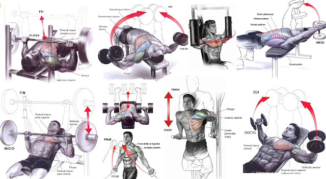 Muscle gain chest workout