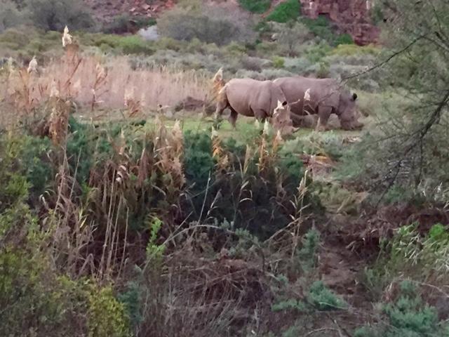 Rhinos South Africa