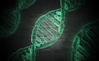 Планы создания базы данных ДНК