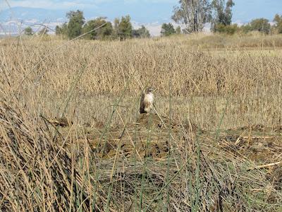 Sacramento National Wildlife Refuge