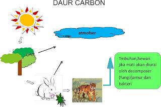 Daur Karbon adalah