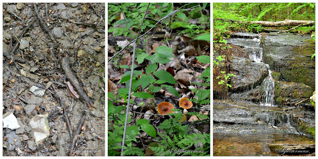 Fall Hollow Waterfall Photo Collage of Surrounding Area