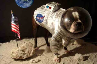 Moon lander dog