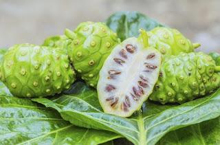 Imagem do fruto noni