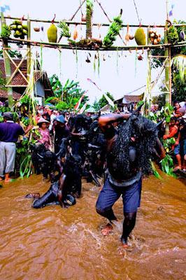 Upacara Adat Kebo-Keboan Suku Osing Banyuwangi