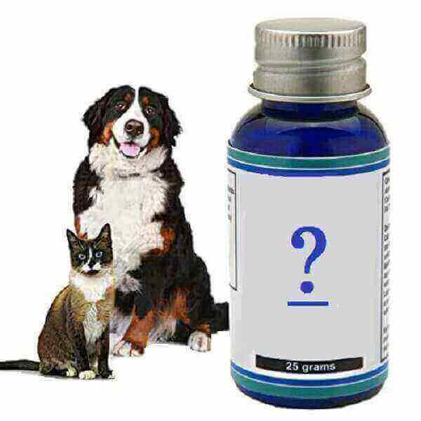 Cats,Usefulness of Gabapentin in Neurogenic Pain,Medications for fearful dogs and cats,Dosages Dog Alprazolam Clonidine Gabapentin Lorazepam Maropitant citrate Trazodone,Gabapentin, neurontin, neuropathic pain, evidence, effect, adverse effects, side effects, adverse reactions, dog, pharmacokinetic, pharmacodynamics, monte carlo,Gabapentin dogs reviews breathing price how to wean dog off and tramadol for dogs  panting after taking my dog off for cats dosage