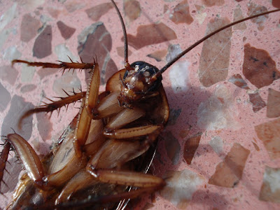 Safer Methods: Using Organic Pest Control for Roaches and Mites