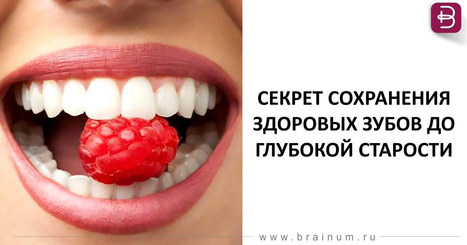 Строение зуба и его тканей. Формирование зубов у человека