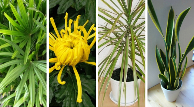 Houseplants that can help clean the house. Houseplant Appreciation Day 2017