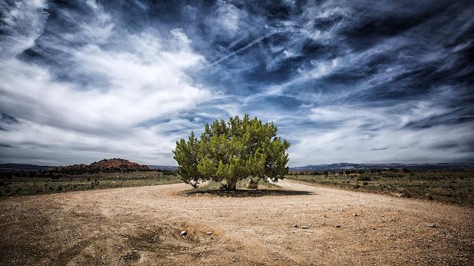 Wallpaper: Juniper Tree