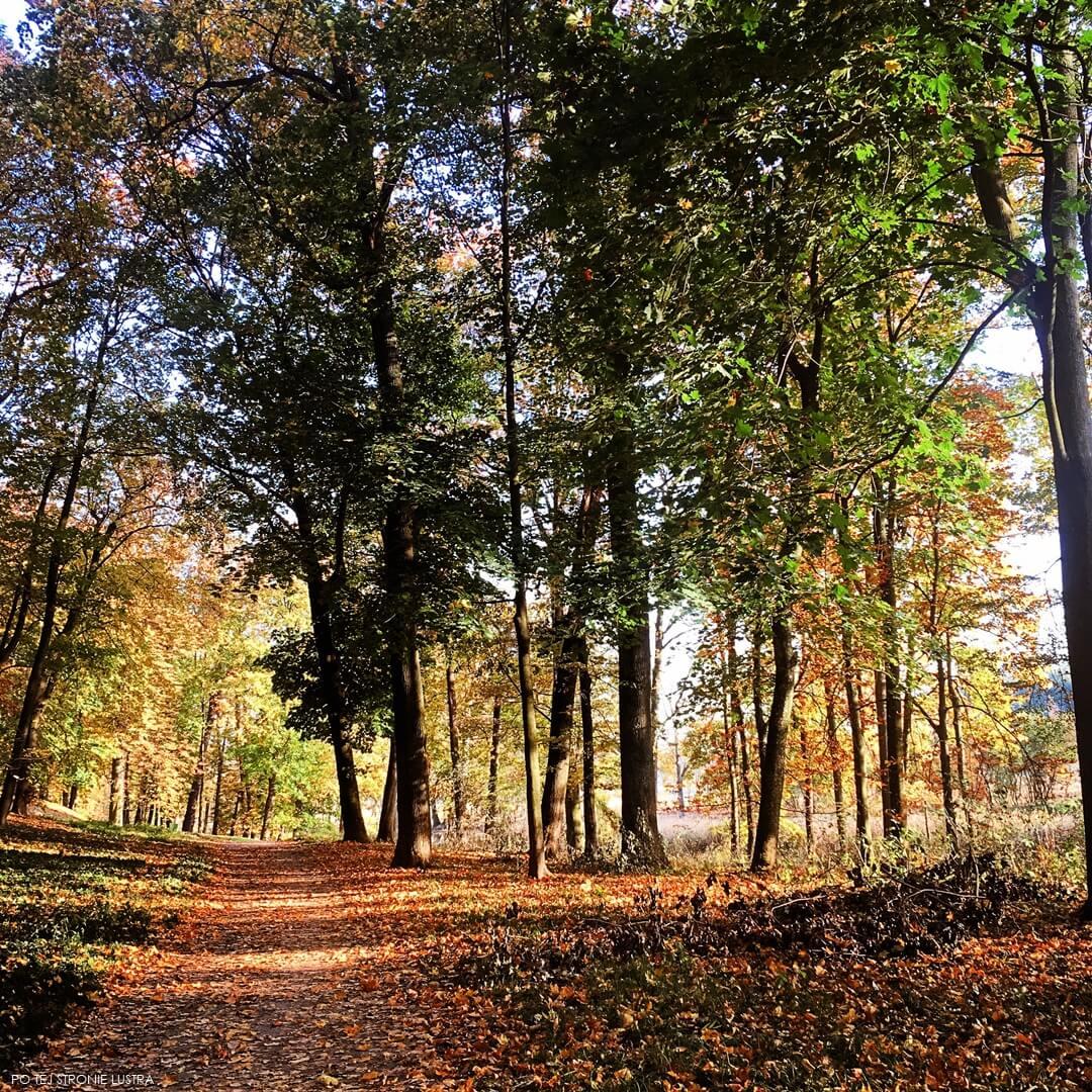złota jesień w parku