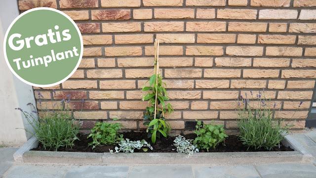 Gratis Tuinplant