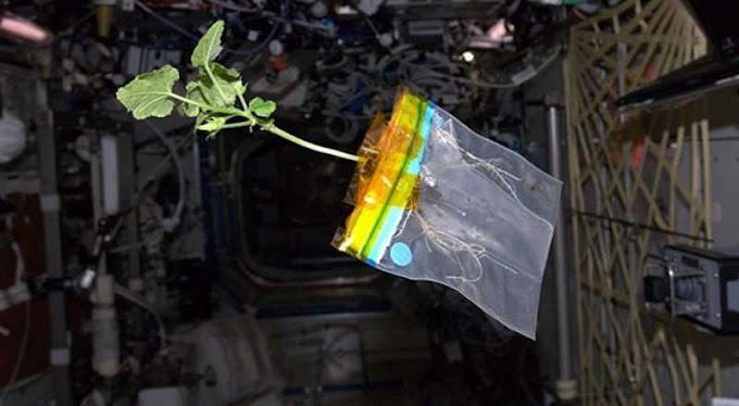Professor de Campina Grande se destaca por projeto que desenvolve cultivo de plantas no espaço