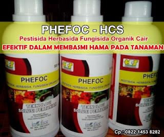 Cara Ampuh Membasmi Hama Wereng Dengan PHEFOC - HCS