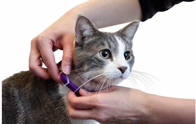 إختراق شبكات الواي فاي بإستخدام القط