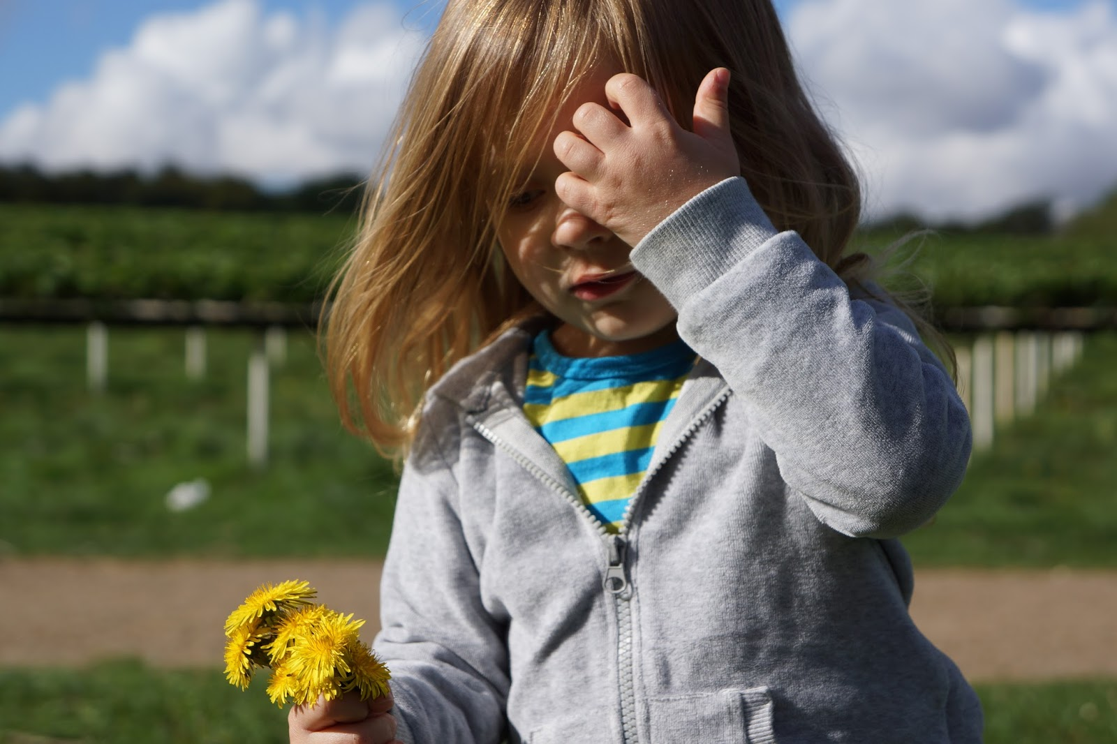 toddler girl holding a bunch of buttercups