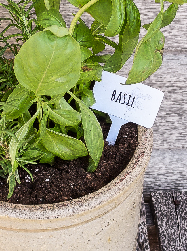 DIY Dollar Tree Basil herb marker