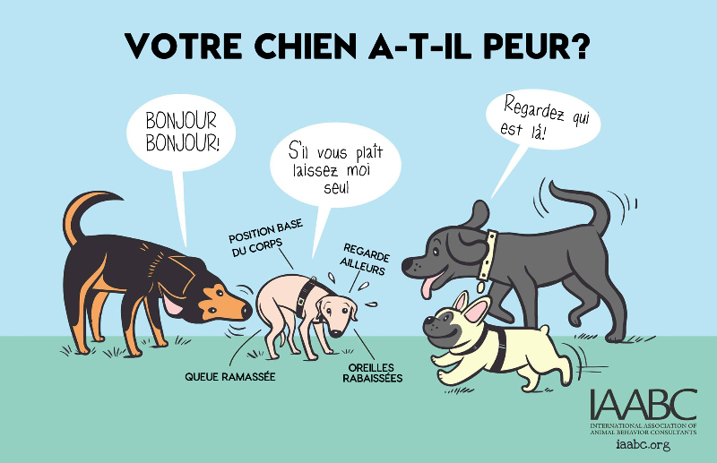Comment dresser son chiot: 24 tapes - wikiHow