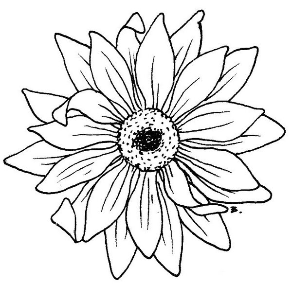 Daisy Tattoo Outline: Beccy's Place: Sunflower / Gerbera