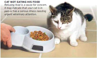 kucing cacingan tidak mau makan