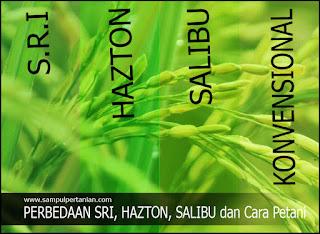 Perbedaan SRI, HAZTON, Salibu dan Cara Petani (Konvensional)