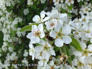 Apfelblüte in Altenstein Foto von Stampin' Up! Demonstratorin in Coburg