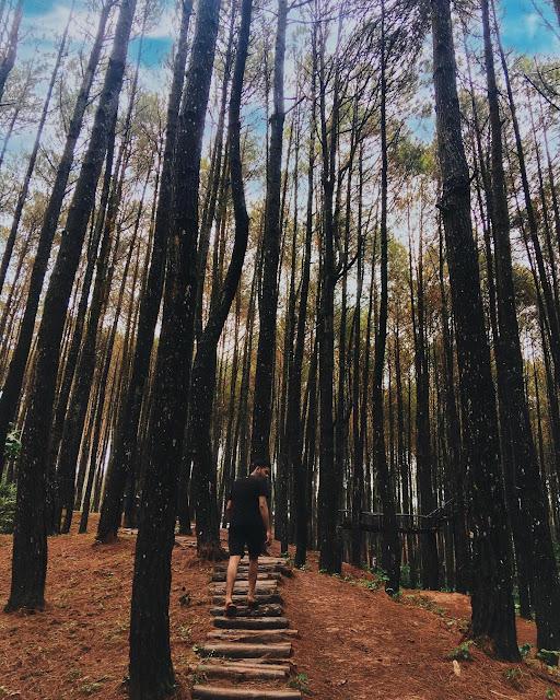 Hutan pinus asri yogyakarta