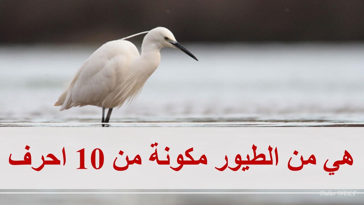 كلمة السر هي من الطيور مكونة من 10 احرف