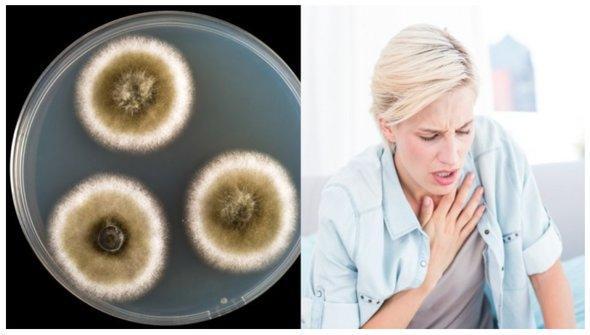 11 semne ale expunerii la mucegaiuri toxice!