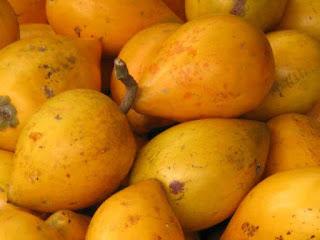canistel fruit images