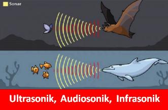 Apa yang dimaksud dengan gelombang ultrasonik infrasonic dan audisonik