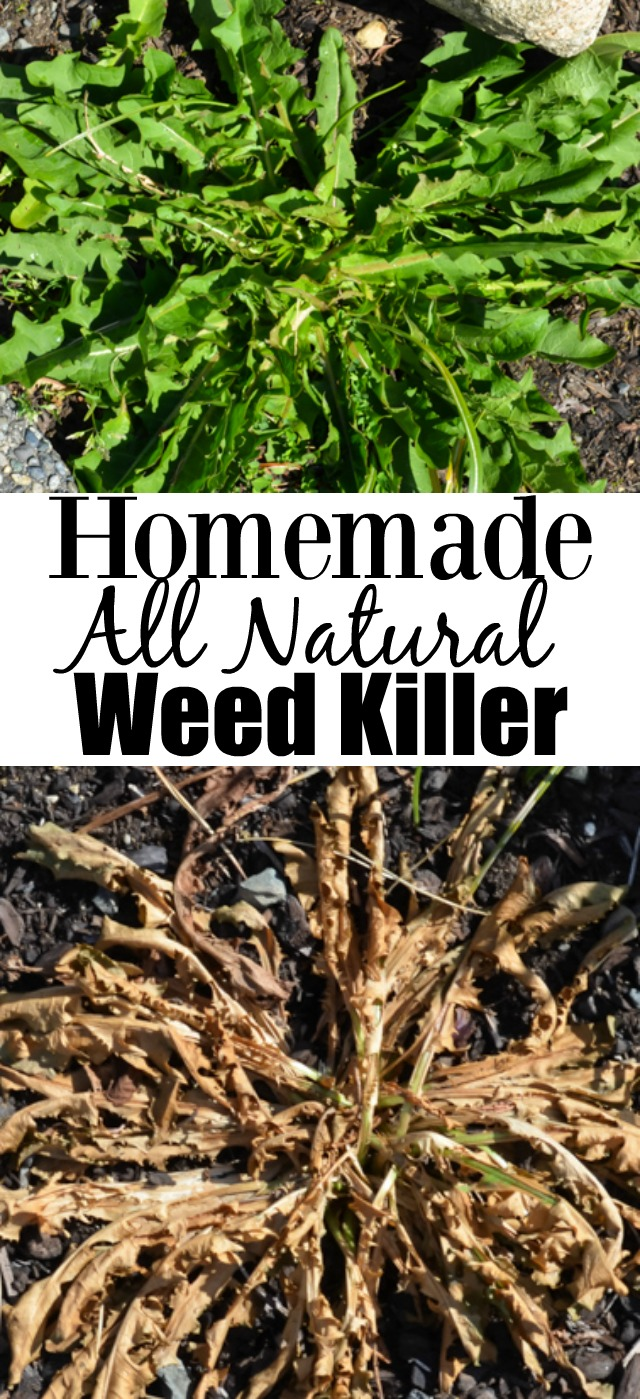 Homemade All-Natural Inexpensive Weed Killer