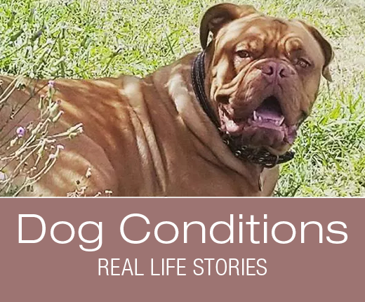 Dog Conditions - Real-Life Stories: Juno's Luxating Patella