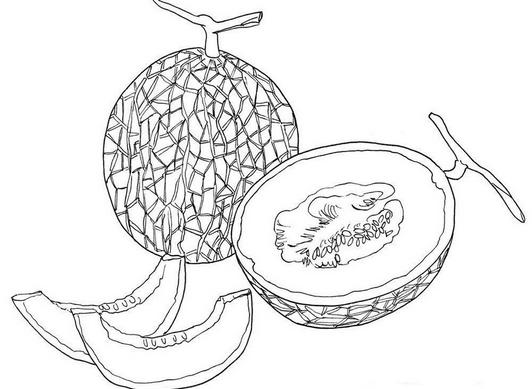gambar belajar mewarnai buah pepaya matang melukis duku di
